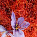 طرح توجیهی کاشت و پرورش زعفران به روش سنتی با نرم افزار کامفار COMFAR
